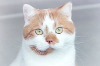 ilove.cat